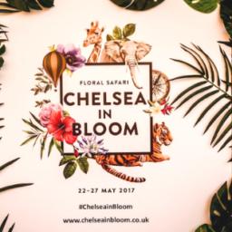 katka cestuje chelsea in bloom flower show londyn anglie kvetiny vystava
